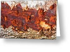 Tree Closeup - Wood Texture Greeting Card