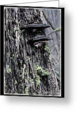 Tree Conk Greeting Card