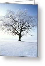 Tree Covered In Hoar Frost Greeting Card