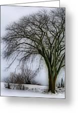 Tree Elder Greeting Card