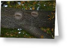 Tree Face 1 Greeting Card