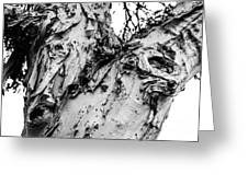 Tree Face No Color Greeting Card by Lisa Cortez