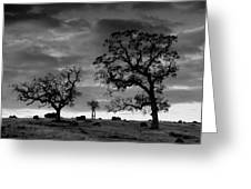 Tree Family In Black And White Greeting Card