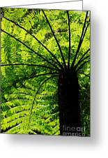 Tree Fern Greeting Card