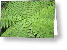 Tree Fern (ponga Greeting Card