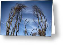 Tree Fingers Greeting Card