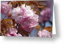 Tree Flower 01 Greeting Card