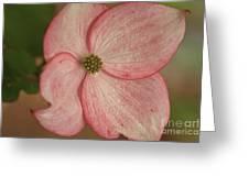 Tree Flower Greeting Card