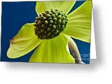 Tree Flower II Greeting Card