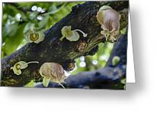 Tree Flowers Greeting Card