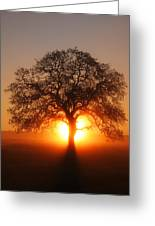 Tree Fog Sunrise Greeting Card