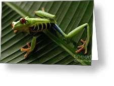 Tree Frog 16 Greeting Card