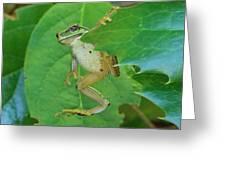 Tree Frog And Mahonia. Greeting Card