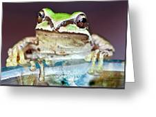Tree Frog Greeting Card by Jean Noren
