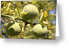 Tree Fruit Greeting Card