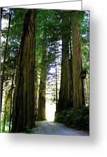Tree Giants Greeting Card
