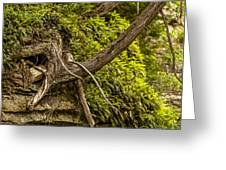 Tree Grows From Rock Outcrop Greeting Card