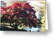 Tree Hanging Into Lake Greeting Card
