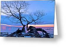 Tree Hanging Over Lake - Photographers Collection Greeting Card