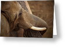 Tree Hugging Elephant Greeting Card