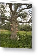 Tree Hugging Green Ecological Concept  Greeting Card