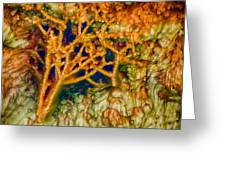 Tree In A Park Hot Springs Greeting Card