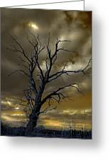Tree In A Storm Greeting Card