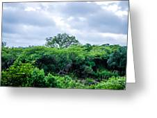 Marula Tree In African Sky Greeting Card