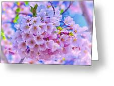 Tree In Bloom Greeting Card