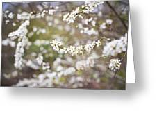 Tree In Blossom Greeting Card