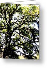 Tree In Blue Ridge Mountains Greeting Card