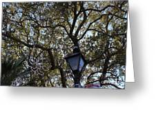 Tree In French Quarter Greeting Card