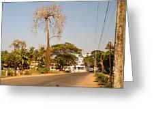 Tree In Goa Greeting Card