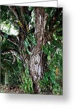 Tree In Kauai Greeting Card
