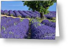 Tree In Lavender Greeting Card