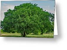 Tree In Nature Greeting Card