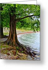 Tree In Paradise Greeting Card