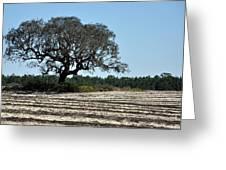 Tree In Plowed Field Greeting Card