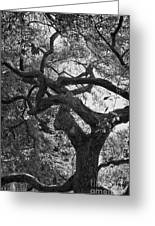 Tree In Prescott Park - Bw Greeting Card