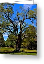Tree In Rock Hill Greeting Card