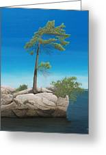 Tree In Rock Greeting Card