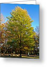 Tree In The Cemetery Greeting Card