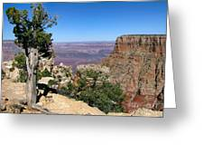 Tree In The Grand Canyon Greeting Card