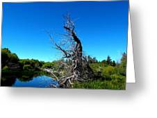 Tree In The Marsh Greeting Card