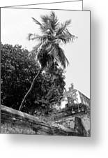 Tree In The Temple Greeting Card