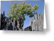 Tree In The Tsingy De Bemaraha Madagascar Greeting Card