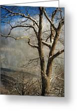 Tree In Winter Greeting Card