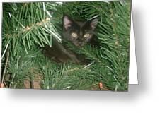 Tree Kitten Greeting Card