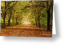 Tree Lane Greeting Card