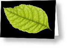 Tree Leaf Greeting Card